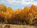 Mount Margaret Trail 10-3 (21386096704).jpg