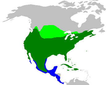 The range of the Mourning Dove