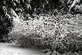 Murdo-Fraser-Park-North-Vancouver-BC-2013-12-I.jpg
