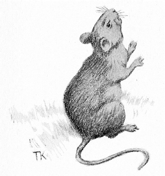 File:Mus - mouse.jpg