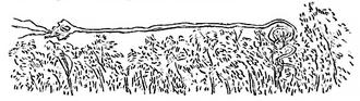 Rainbow Serpent - Image: Myndie (Aborigines of Victoria)