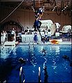 NASA Swimming Pool.jpg