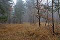 NSG Schwarzes Moor bei Resse IMG 3845.jpg