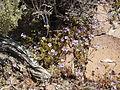 NTS - Wild Flowers 032.jpg