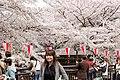 Nakameguro 2009-04-05 (3448456531).jpg