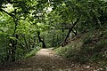 National nature reserve Milešovka in summer 2014 (7).JPG