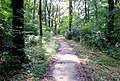 Natural monument Suma Junakovic , Apatin , Serbien , APW - panoramio (2).jpg