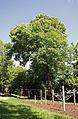 Naturdenkmal Seuttergasse.jpg