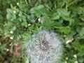 Nature of Latvia DSCF3428 - Flickr - davispuh.jpg