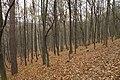 Nature reserve Šance in autumn 2012 (10).JPG