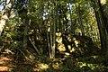 Nature reserve Ptaci stena in autumn 2011 (28).JPG