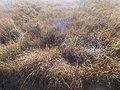 Naturschutzgebiet Ewiges Meer 31-10-2018 Chr Didillon DSC01778 (76).jpg