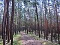 Nd Spitziger Stein - panoramio.jpg