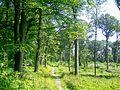 Nerville-la-Forêt (95), route du Tourniquet de Montsoult 03.jpg