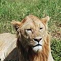 Ngorongoro 2012 05 30 2572 (7500985764).jpg