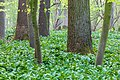 Nordkirchen, Naturschutzgebiet Ichterloh -- 2018 -- 2053.jpg