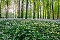 Nordkirchen, Naturschutzgebiet Ichterloh -- 2018 -- 2299-303.jpg