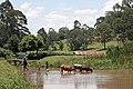 Nyamira, Kenya - panoramio.jpg