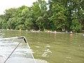 Nyergesújfalu Dunapart kajakosok - panoramio.jpg