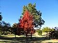 Oklahoma City, OK - USA - Will Rogers Park - panoramio (13).jpg