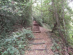 Old Park Wood - Steps