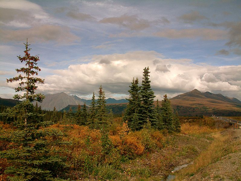 Bestand:On the way into Denali National Park.jpg