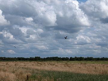 Ooievaars vliegen over de AldeFeanen.JPG