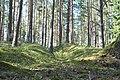 Oriģinālie 1.pasaules kara ierakumi, Babītes pagasts, Babītes novads, Latvia - panoramio.jpg
