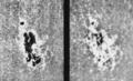 PSM V65 D023 Great sunspot of oct 1903 showing the calcium flocculi.png