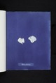 Padina pavonia (NYPL b11861683-419650).tiff