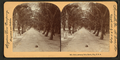 Palm Avenue, Palm Beach, Florida, by Singley, B. L. (Benjamin Lloyd).png