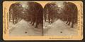 Palm Avenue, Palm Beach, Florida, by Singley, B. L. (Benjamin Lloyd).png