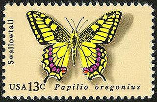 <i>Papilio machaon oregonius</i> Subspecies of swalllowtail butterflies