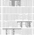 Parasite130116-fig1 Entamoeba gingivalis.tif