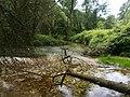 Parco Regionale del Brenta 3.jpg