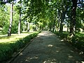 Park miejski - panoramio (1).jpg