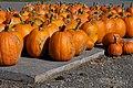 Parked Pumpkins (6275339978).jpg