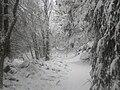 Passage enneigé, Millevaches en Limousin.jpg