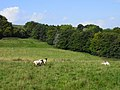 Pasture and woodland, Tidcombe - geograph.org.uk - 1561790.jpg