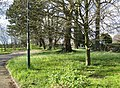 Patch of trees by the Cambridge Road - geograph.org.uk - 784091.jpg