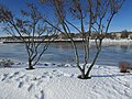 Penobscot River in Winter image 4.jpg