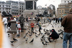 People young and old feed the pigeons in Trafa...