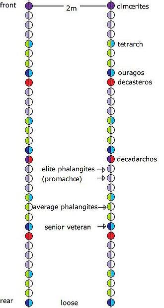 Phalanx - Two standard Macedonian enomotiæ (32 men each) in loose formation 2m. apart (32 ranks).