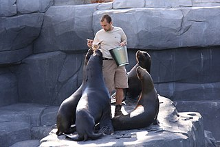 Zookeeper Person who manages zoo animals
