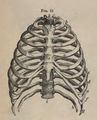 Physiology for Young People - 1884 - The chest.png