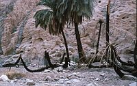 PikiWiki Israel 3384 Gan-Shmuel shz22- 4.jpg