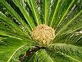 PikiWiki Israel 3687 Plants of Israel.JPG
