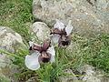 PikiWiki Israel 42125 Iris Hermona.JPG
