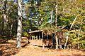 Pinewoods 5.jpg