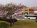 Pink Flower Tree - panoramio.jpg
